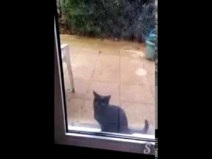 Cat Lets Owners Know She Wants to Come In the House