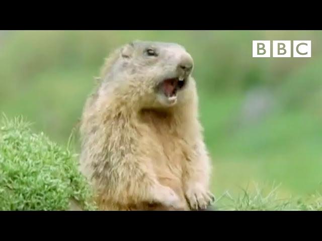 "Funny Talking Animals: ""Alan"""