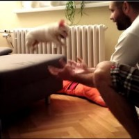 French Bulldog Puppy Jumps into His Dad's Arms