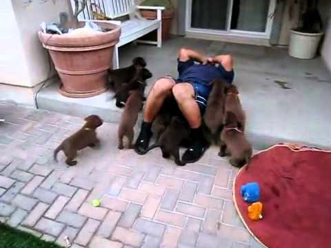 Adorable Puppies Go Into Attack Mode
