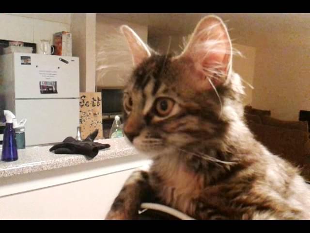 Funny Hat Cat