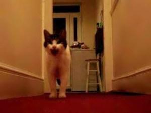 Tiggy the Cat Saying Hello