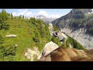 Flying Eagle's Amazing Point of View beautiful view video