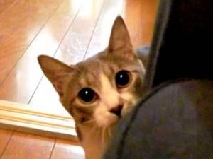 Funny Stalking Cat video