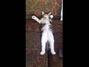 Kitten Slowly Waves Paws During Nap (Cute Video)
