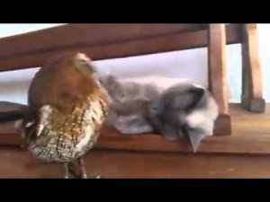 Cute Cat Plays with His Owl Friend video