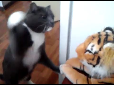 Cat Really Hates This Toy Tiger