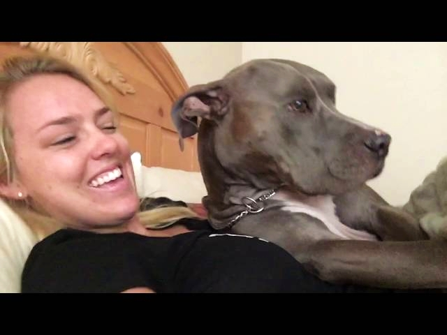 Waking Up to Pit Bull Kisses Cute Video