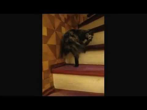 Cat Waltzes Up the Stairs