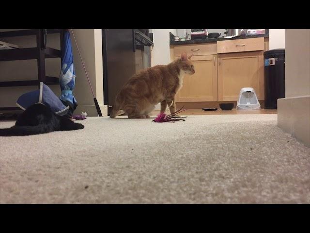 Cat Realizes New Kitten Is Blind