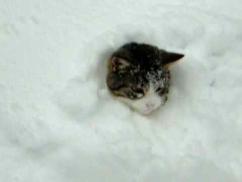 Funny Cats Playing In The Snow