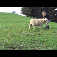 Sheep Loves Playing Ball
