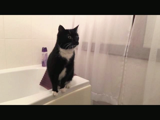 Cat Poses in Front of Mirror