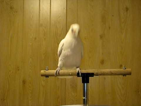 """Frostie Dancing To """"Shake A Tail Feather"""""""