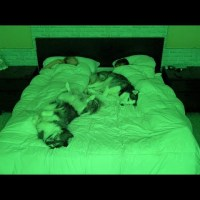 What Sleeping With Two Snuggly Huskies Is Like...