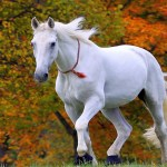 3d Horses Wallpapers Posted By Ryan Simpson
