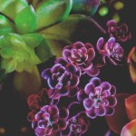 Succulent Iphone Wallpapers Posted By Ryan Anderson