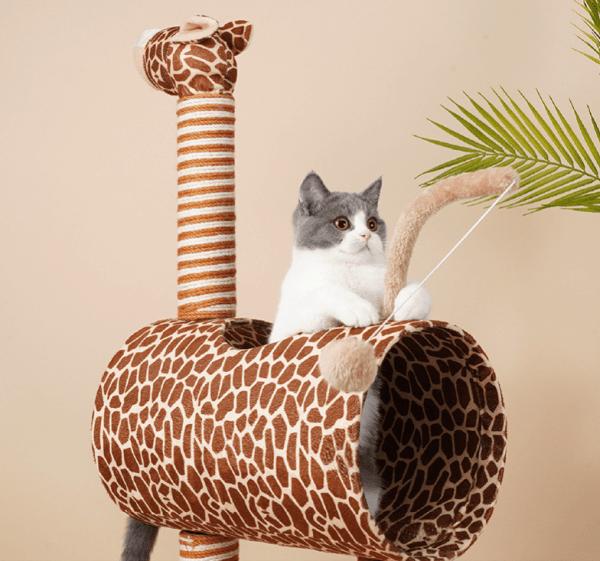 Kat speelt met staart van Mooie Middelgrote Krabpaal