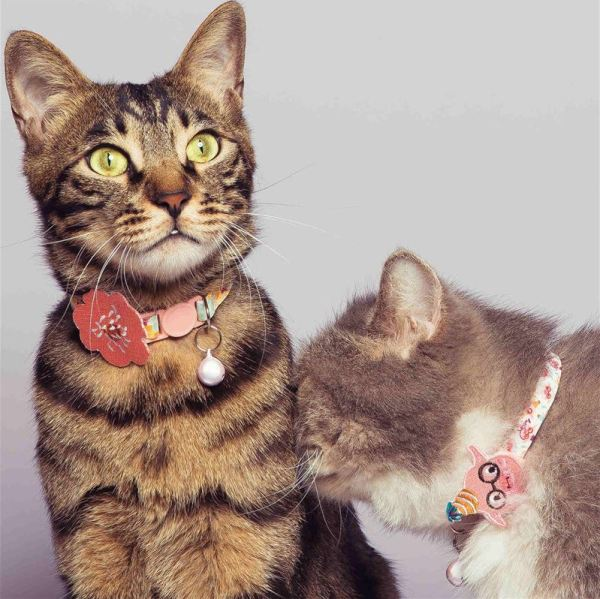 2 katten dragen de mooie kattenbandjes