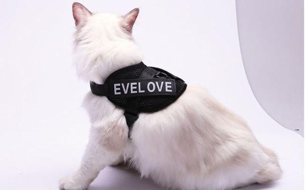 Kattenharnas met Leiband zwart