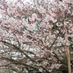 大阪・天王寺「一心寺」へ春のお参りに。晩ご飯はのんびり中食