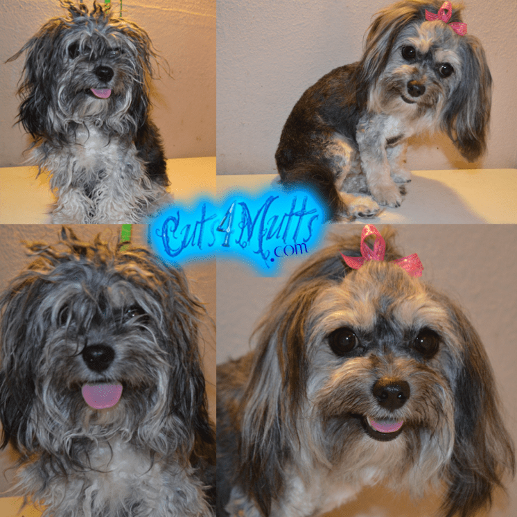 Grooming for a Yorkie Mix