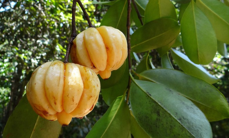 Garcinia Cambogia Does It Actually Help With Weight Loss Cutting Calories