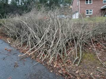 This brush pile made up of a hedge row bush was lined up for us. We made it disappear with our wood chipper