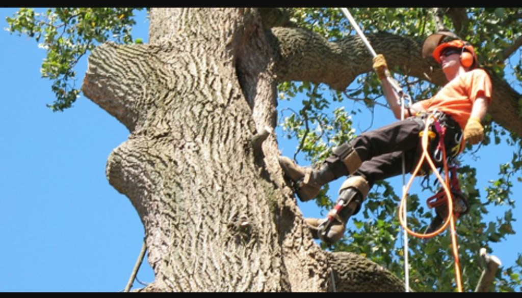 offering tree surgeon services