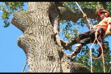 Emergency Tree Felling, Reduction and Removal
