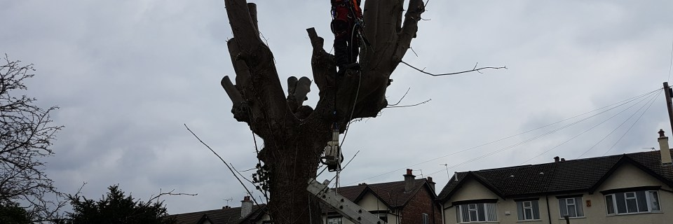 We offer licensed tree surgeon services and stump grinding