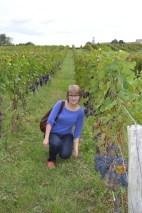 C with grape rows