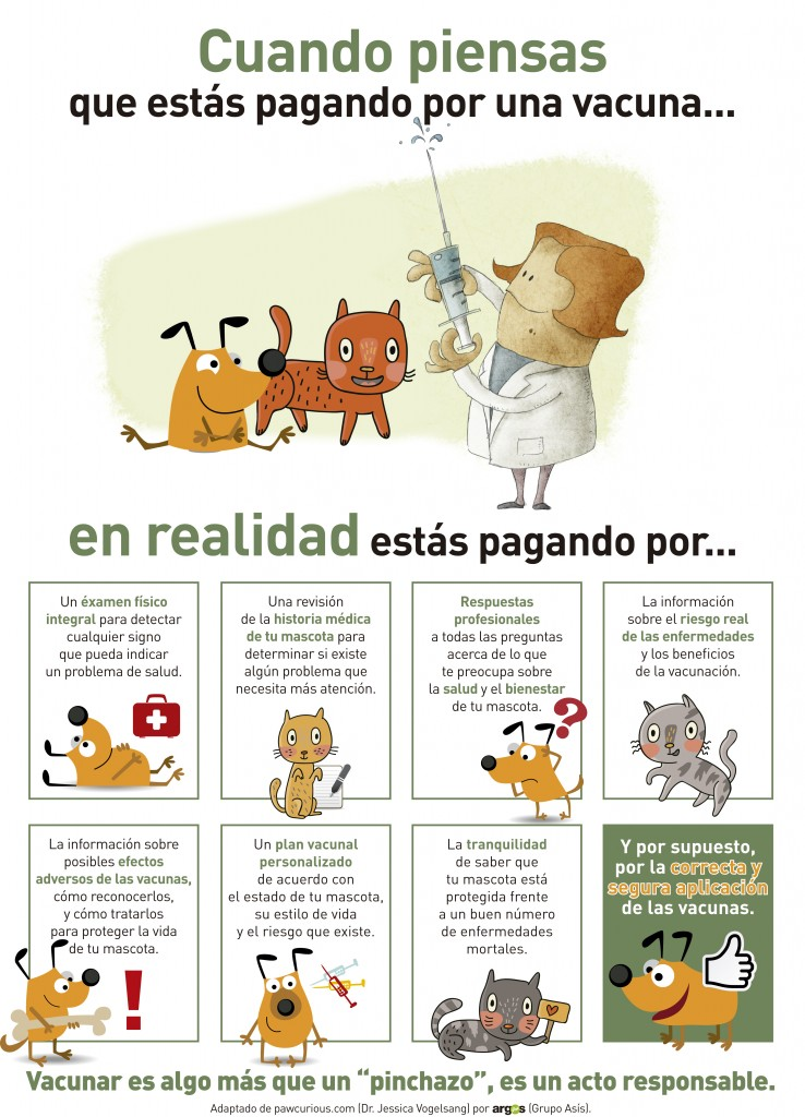 Qu hace un veterinario cuando vacuna nuestra mascota - Que hace un humidificador ...
