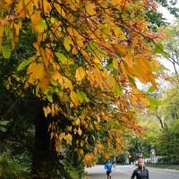 An Autumn Run