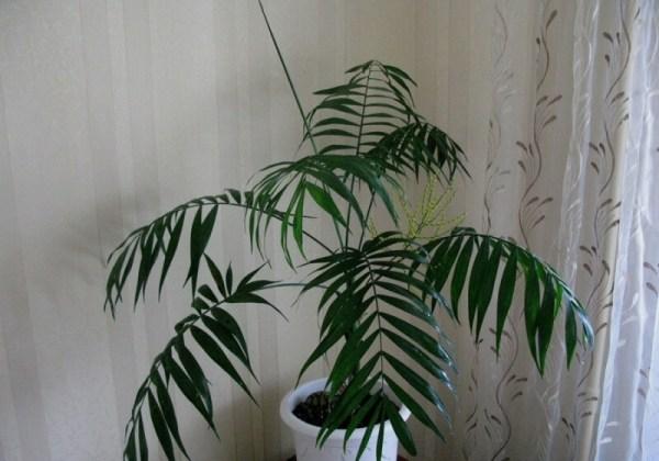 Цветы и растения похожие на пальму: фото и их названия