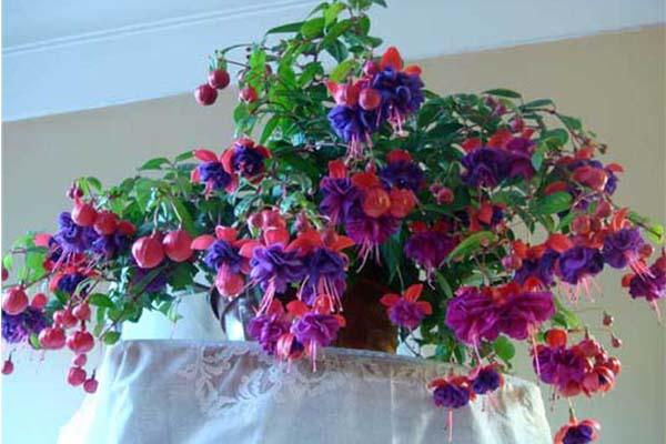 Комнатные цветы цветущие круглый год, названия, описания, фото
