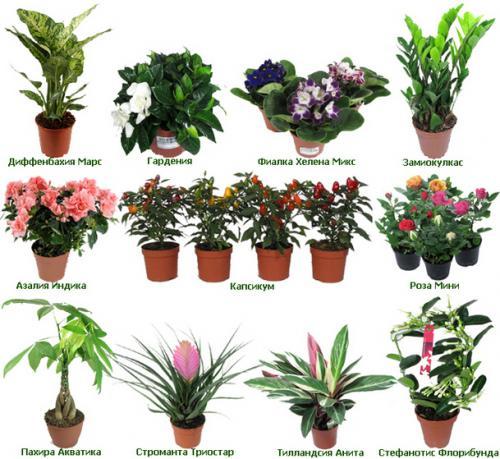 Виды Комнатных Цветов С Фото С Названиями