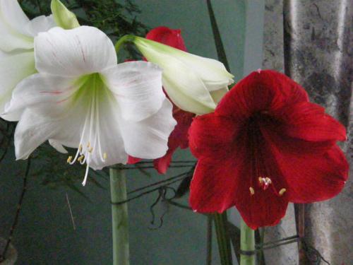 Фото домашних цветов и их названия на нашем сайте