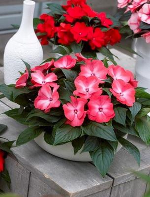Цветущие комнатные растения: фото и названия, описание ...