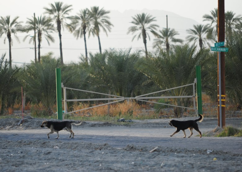 images/Lost Dogs of the Desert/lost-dogs-of-the-desert_8590102694_o