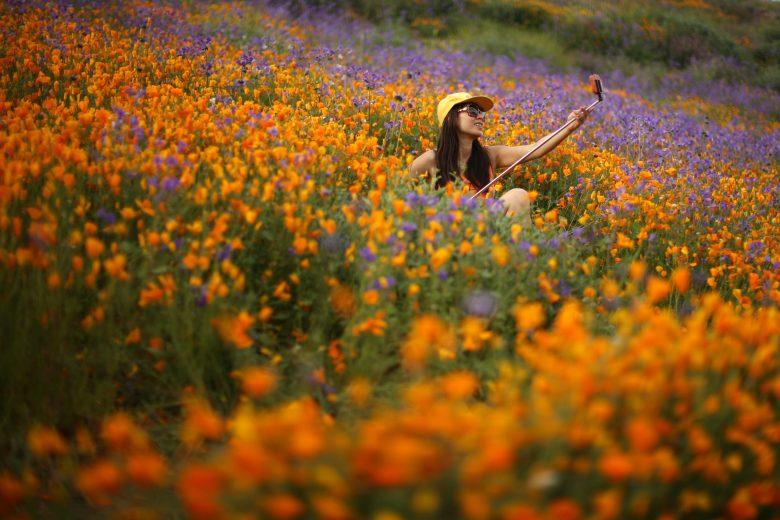 images/Wildflower Bloom/2017-03-15T025945Z_1_LYNXMPED2E04V_RTROPTP_4_CALIFORNIA-FLOWERS
