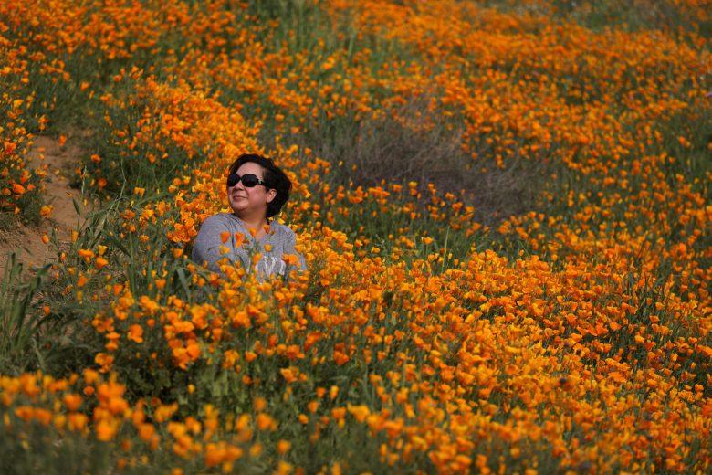 images/Wildflower Bloom/Wildflowers
