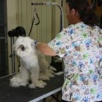 Grooming today at Camino Verde Pet Resort