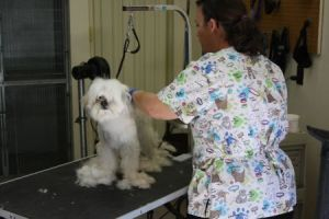 Dog grooming in Tucson