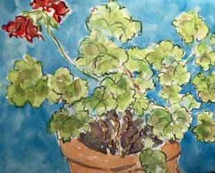 Amy Ehrlich: Pam's geranium