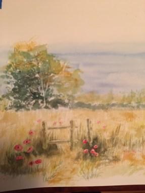 Pamela Walker: Poppies in sunlight