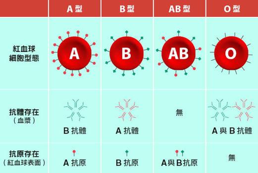 關於血型:為什麼O型血能輸給所有人? - 康健雜誌