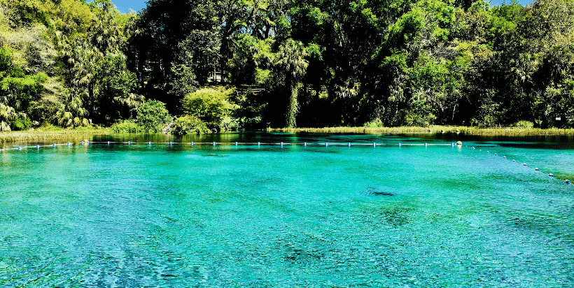 Rainbow Springs State Park campground has access to nature trails and the access to the Rainbow River. It is popular for swimming, tubing, canoeing, and kayaking. Bring your own canoes or kayaks to save a little money.