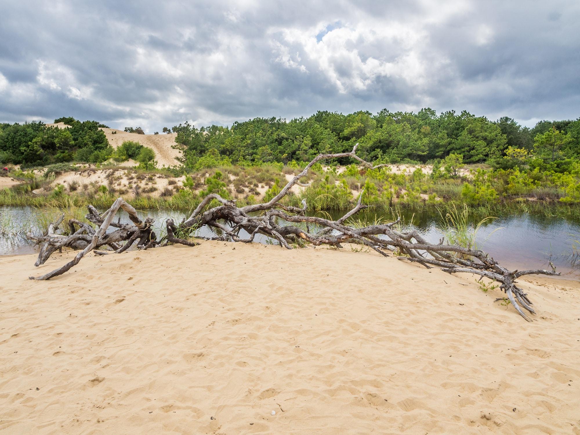 Landscape of Jockey's Ridge State Park: the tallest sand dunes at East Coast