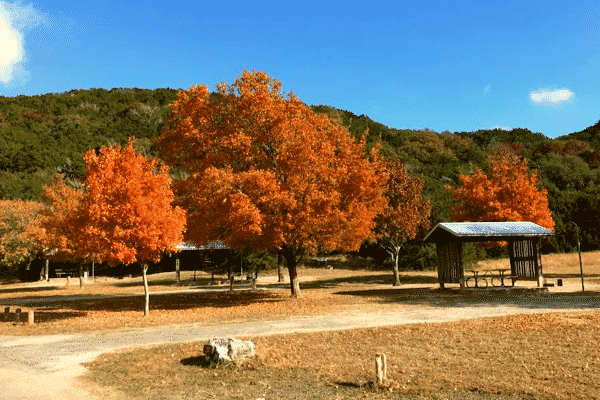 Fall at Lost Maples State Natural Area